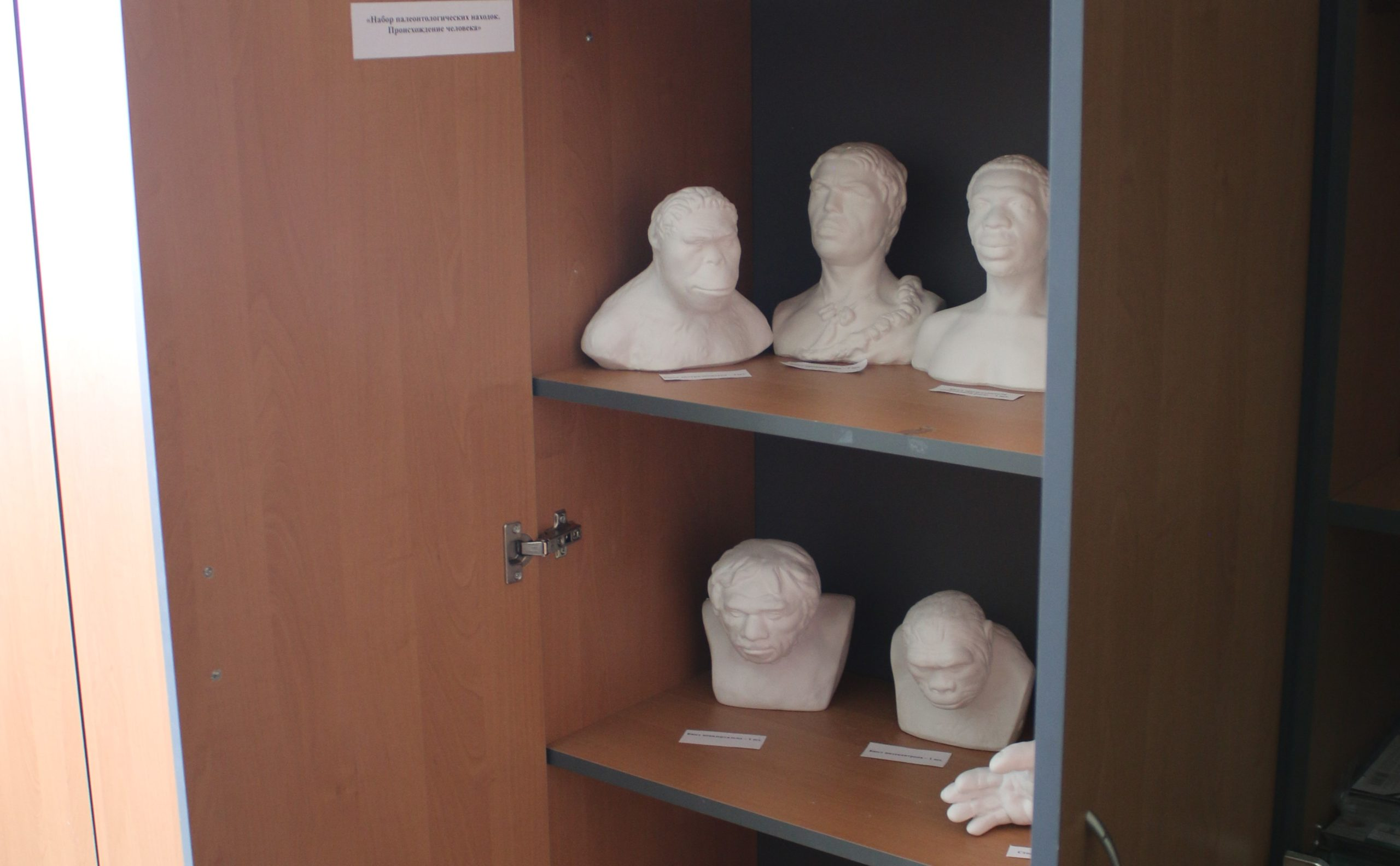 Наглядные пособия в кабинете биологии